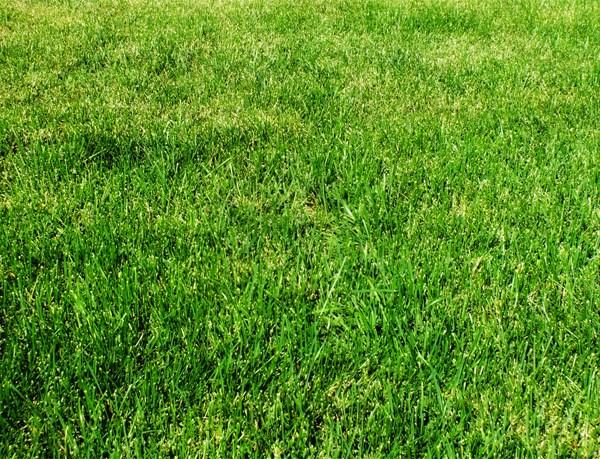 grass_700_1446759168646.jpg