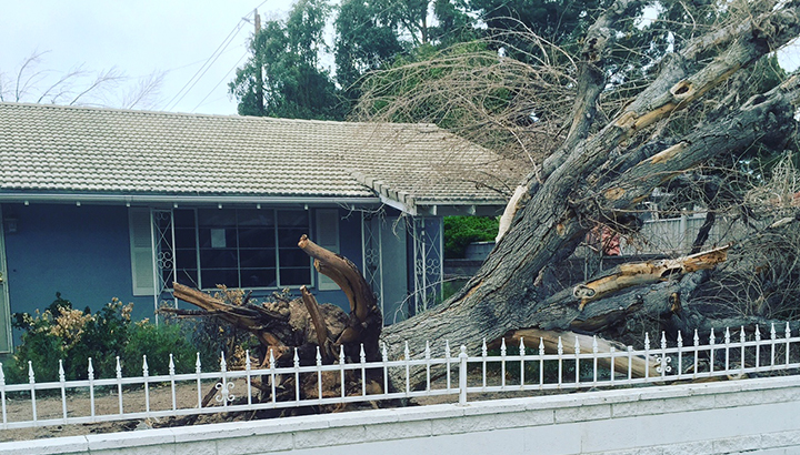 Wind_tree_down_1_700_1457394516870.jpg