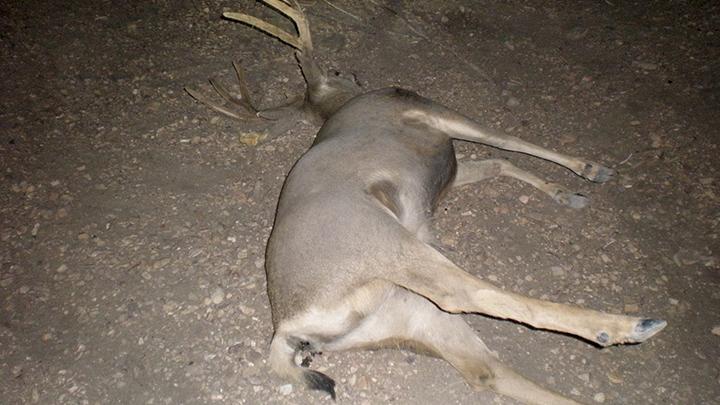 deer_killed_700_1482383228253.jpg