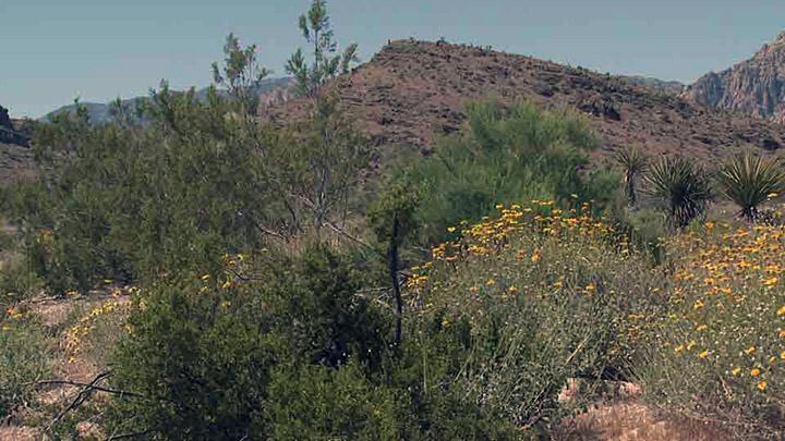 red rock-desert area_700_1487784982132.jpg