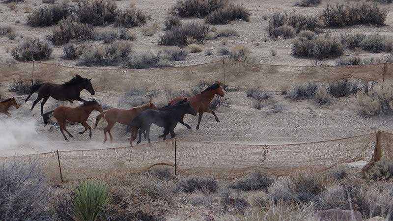 wild_horses_800_1487022182607.jpg