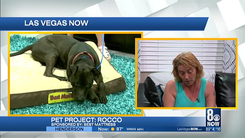 Rocco the 5 year old mix is looking for a forever home