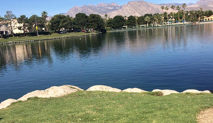 swans_gone_desert_shore_2_700_1493851259483.jpg