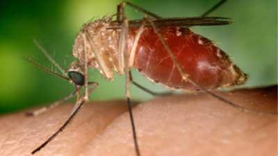 mosquito_1_1496965349283.jpg