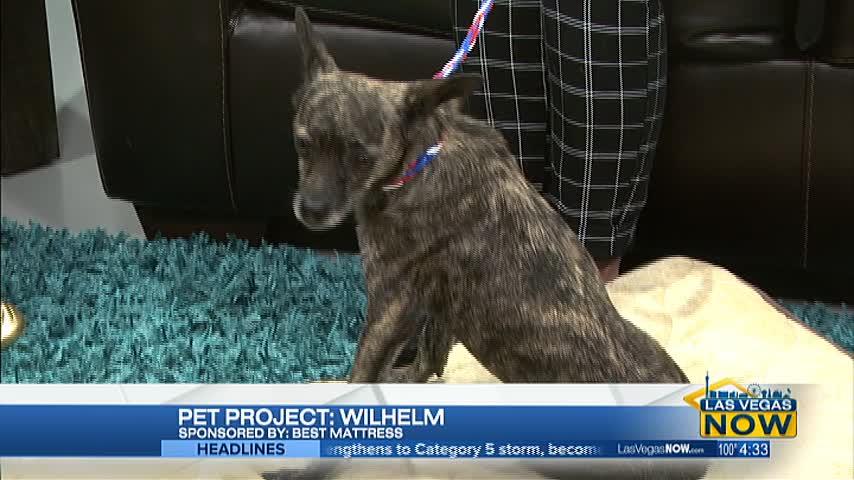 Wilhem is this week's NSPCA Pet Project