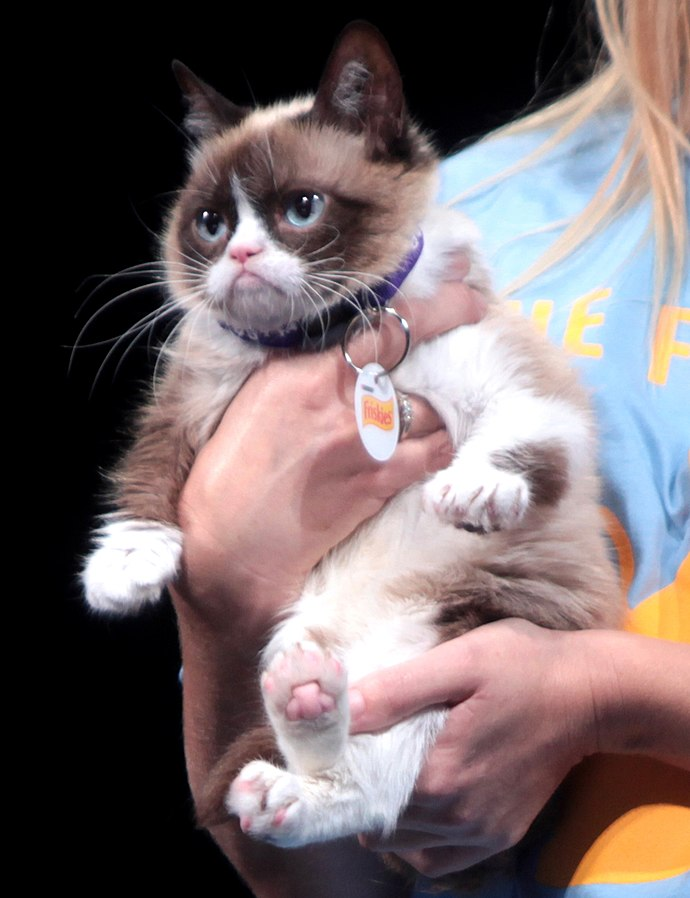 Grumpy_Cat_by_Gage_Skidmore_1516924577108.jpg