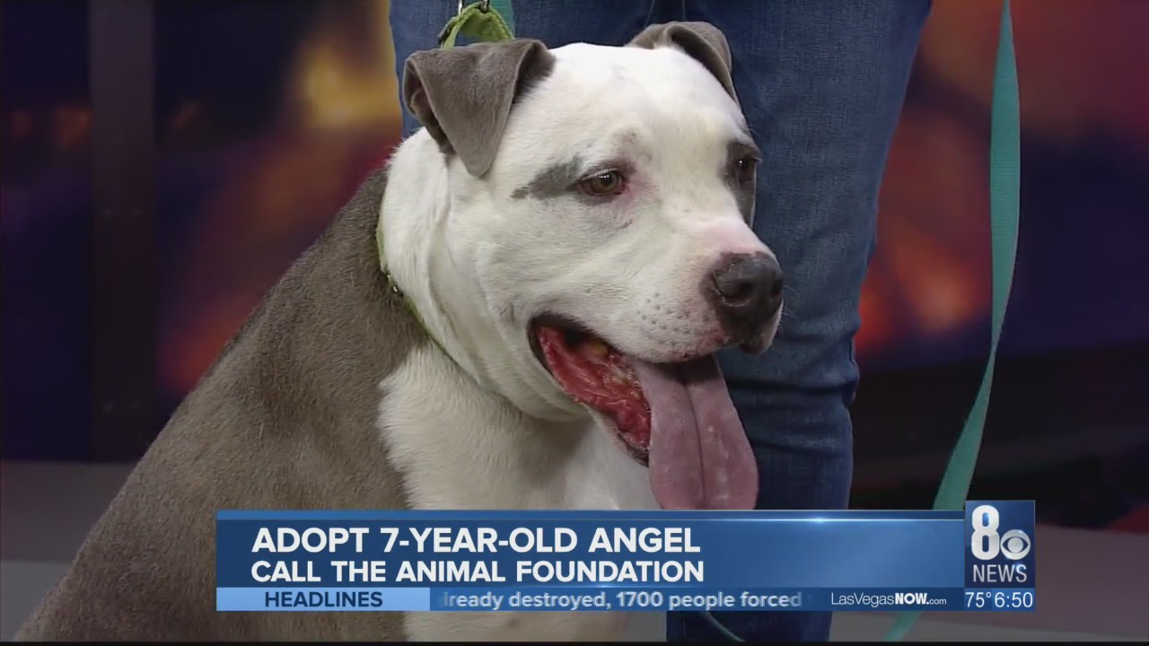 Angel the dog is in need of a home