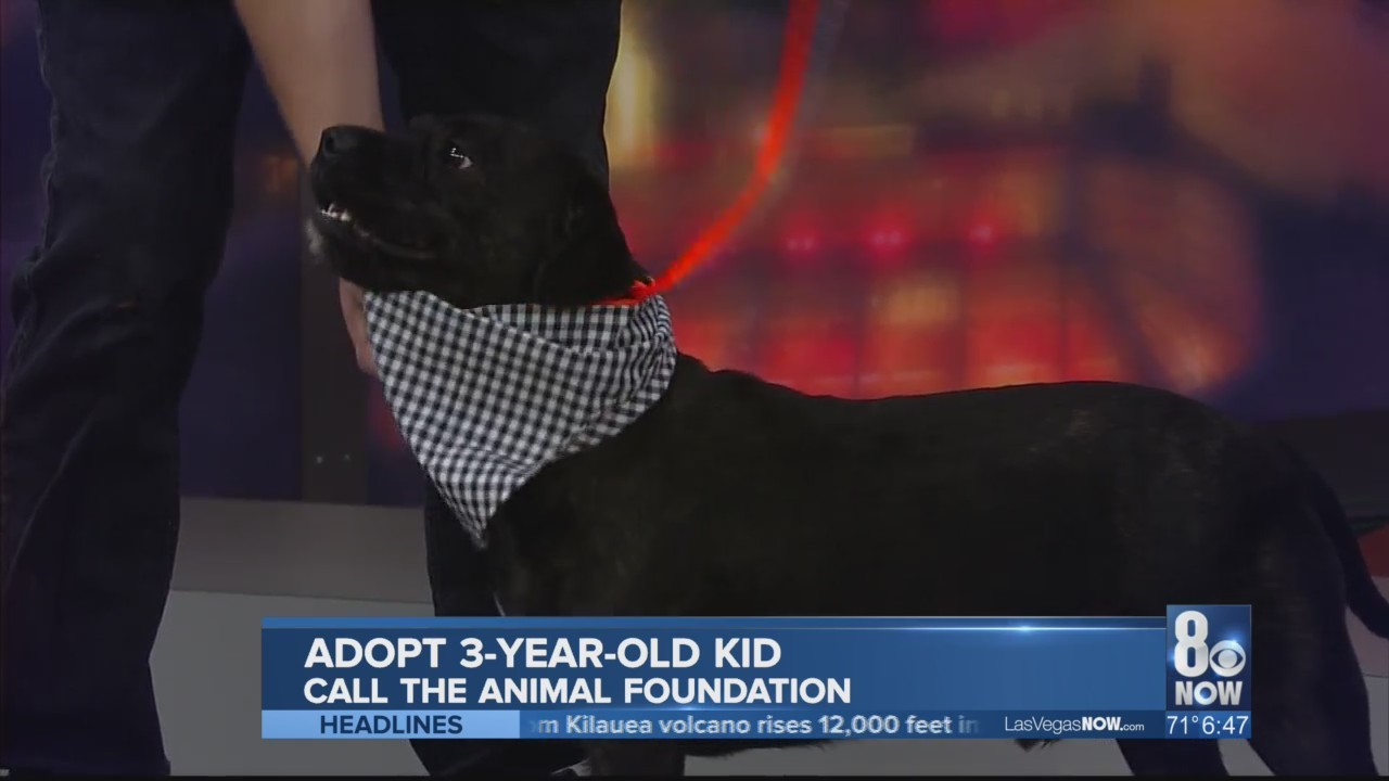Kid the dog needs a home