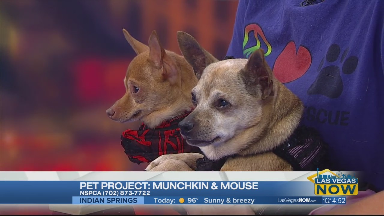 Munchkin & Mouse are looking for homes