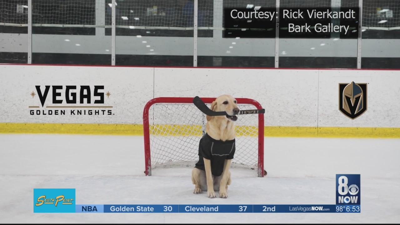 King_Benny_the_Hockey_playing_dog_1528346955472.jpg