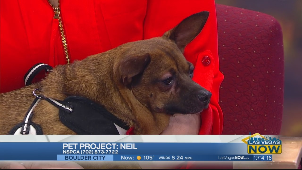 Neil the dog is looking for a fur-ever home