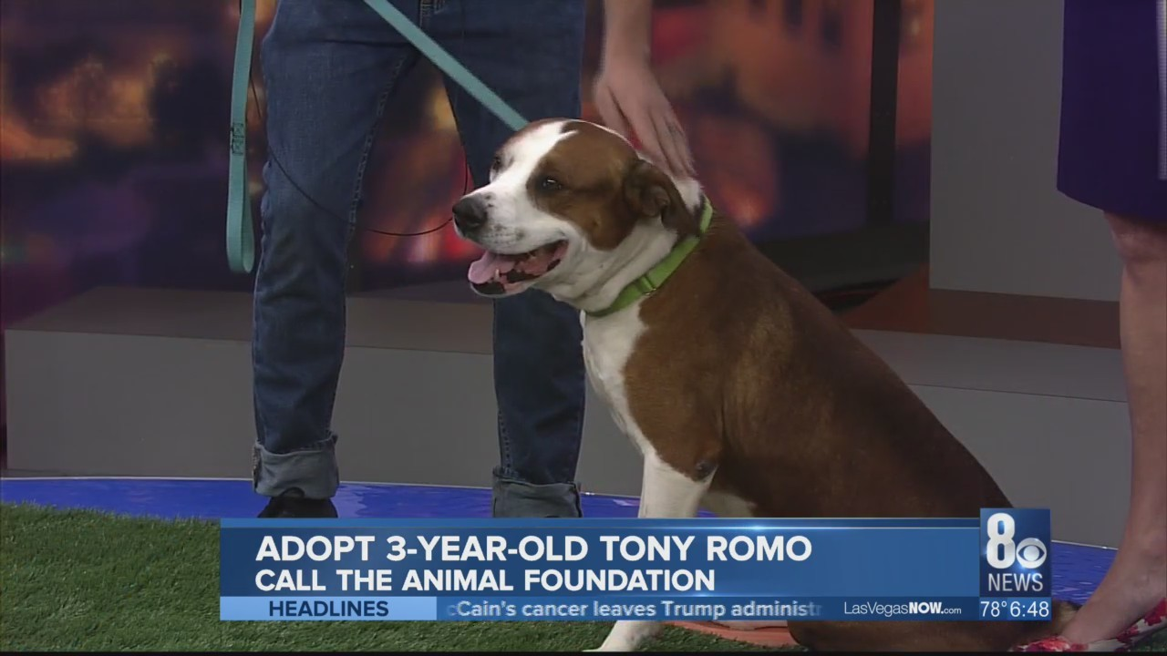 Tony Romo the dog is looking for a home