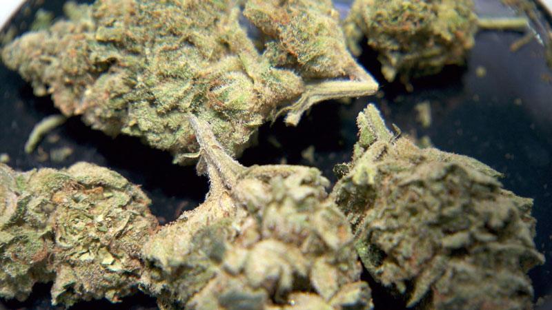 marijuana weed pot cannabis_1518715865474.jpg.jpg