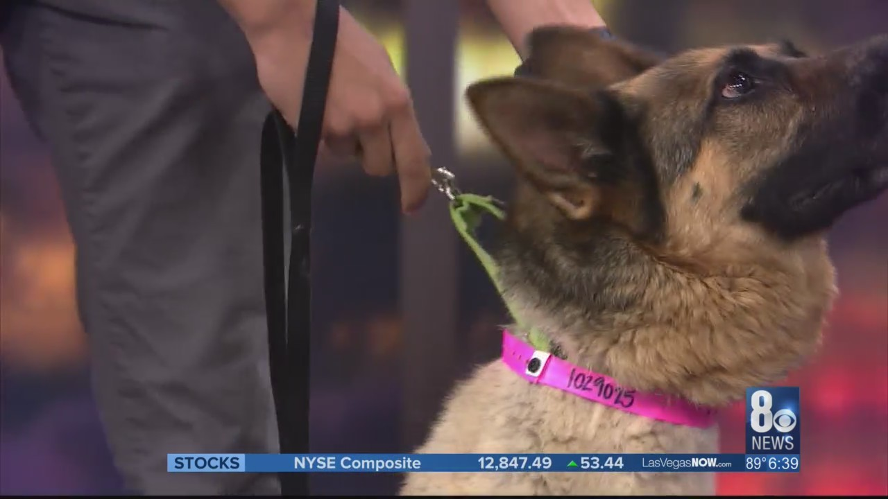 Cocoa the dog makes this week's Puppy Picks