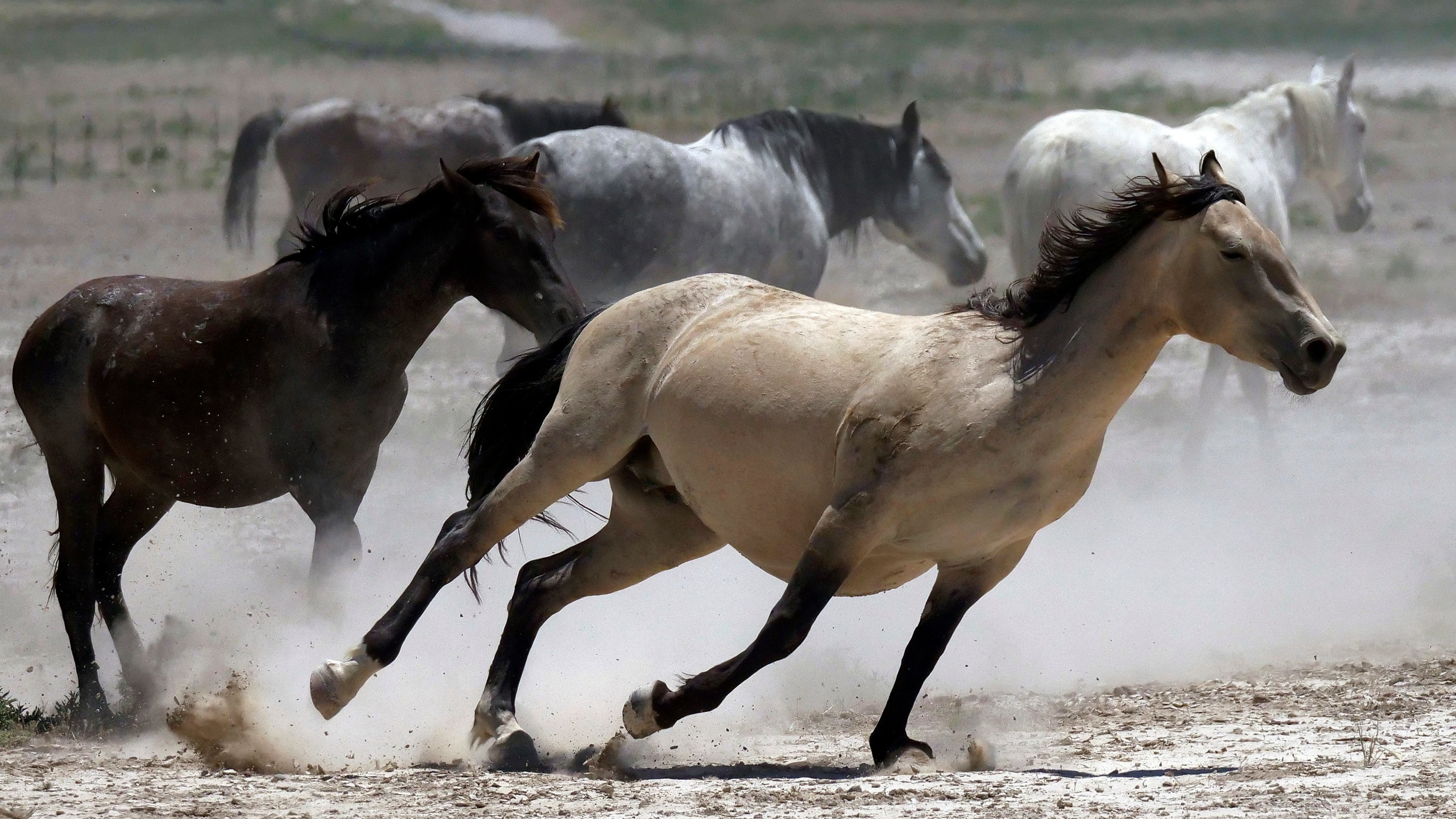 Wild_Horses_Drought_31432-159532.jpg86168741