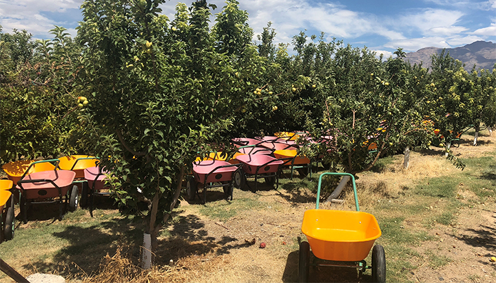 Gilcrease_orchard_700_1534984614320.jpg