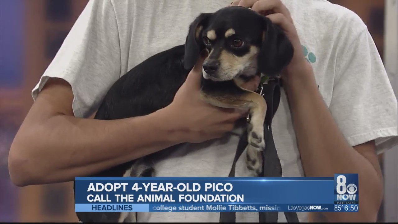 Pico is looking for a forever home
