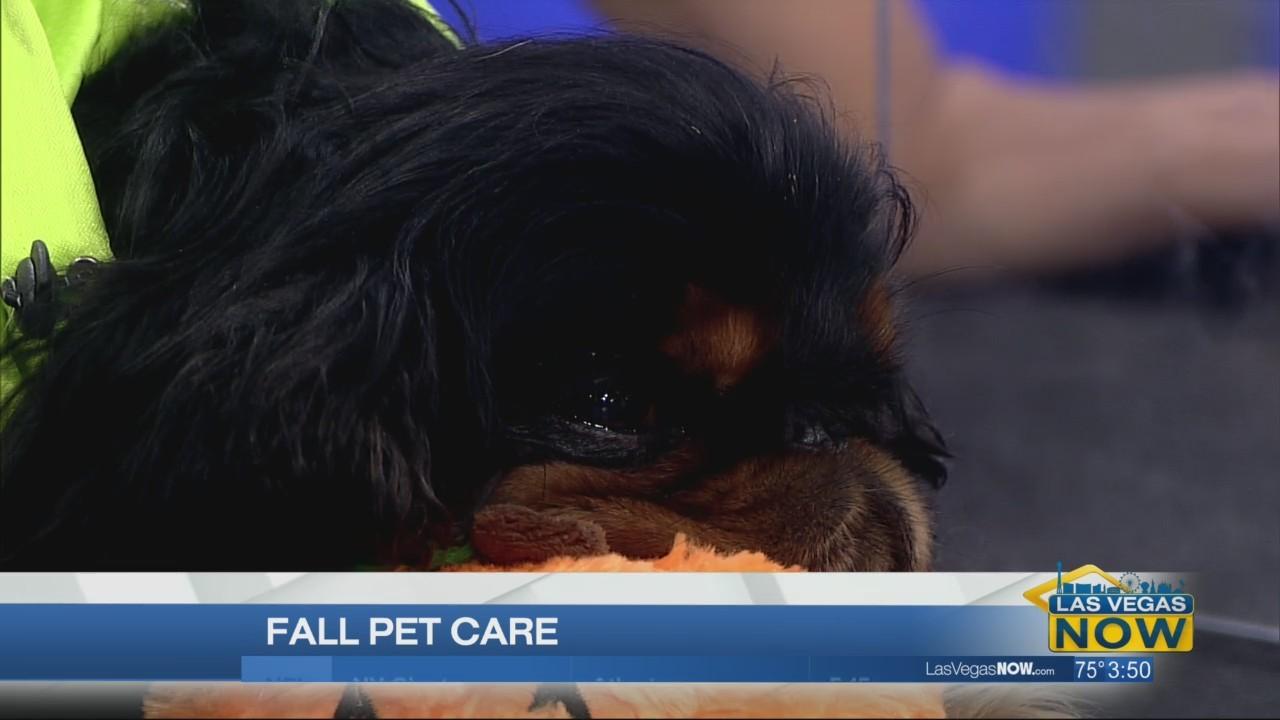 Fall pet care