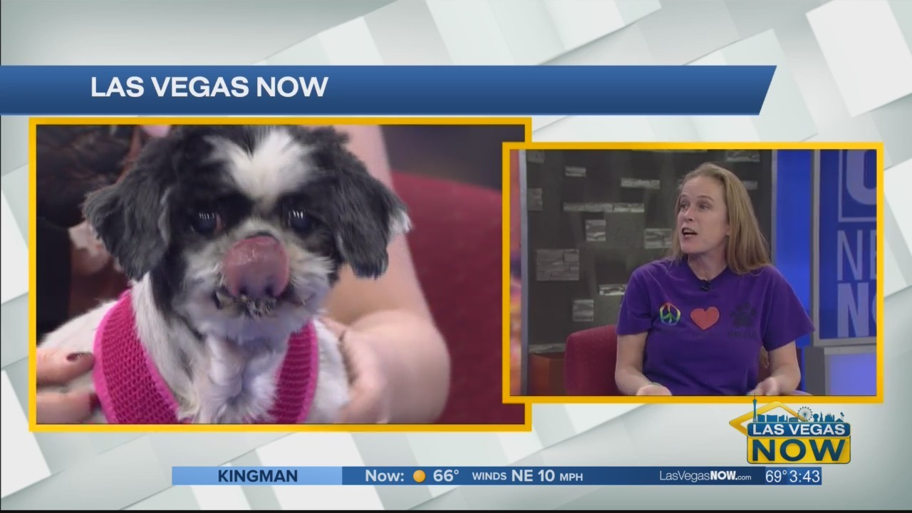 LuLu the senior dog is this week's Pet Project