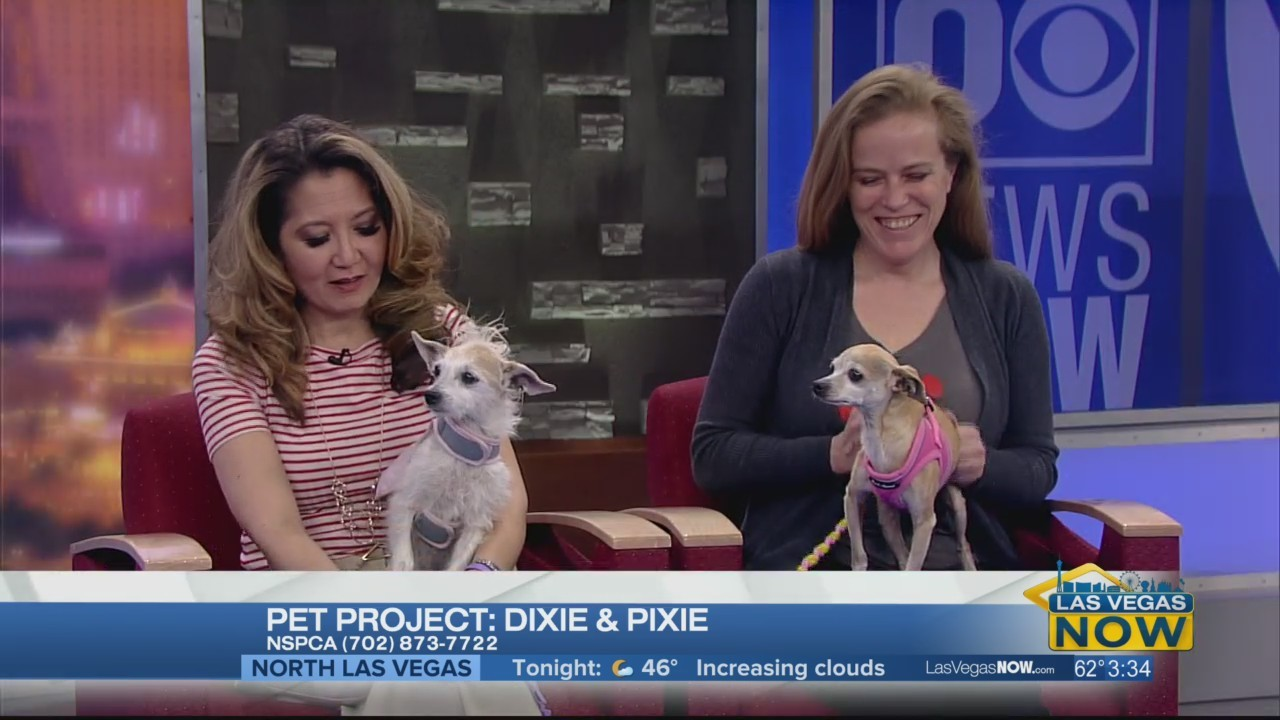 Dixie & Pixie are looking for forever homes