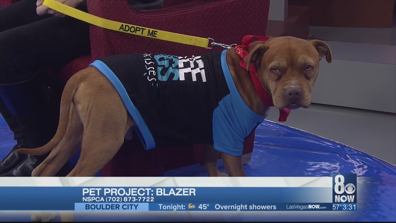 Blazer is this week's Pet Project