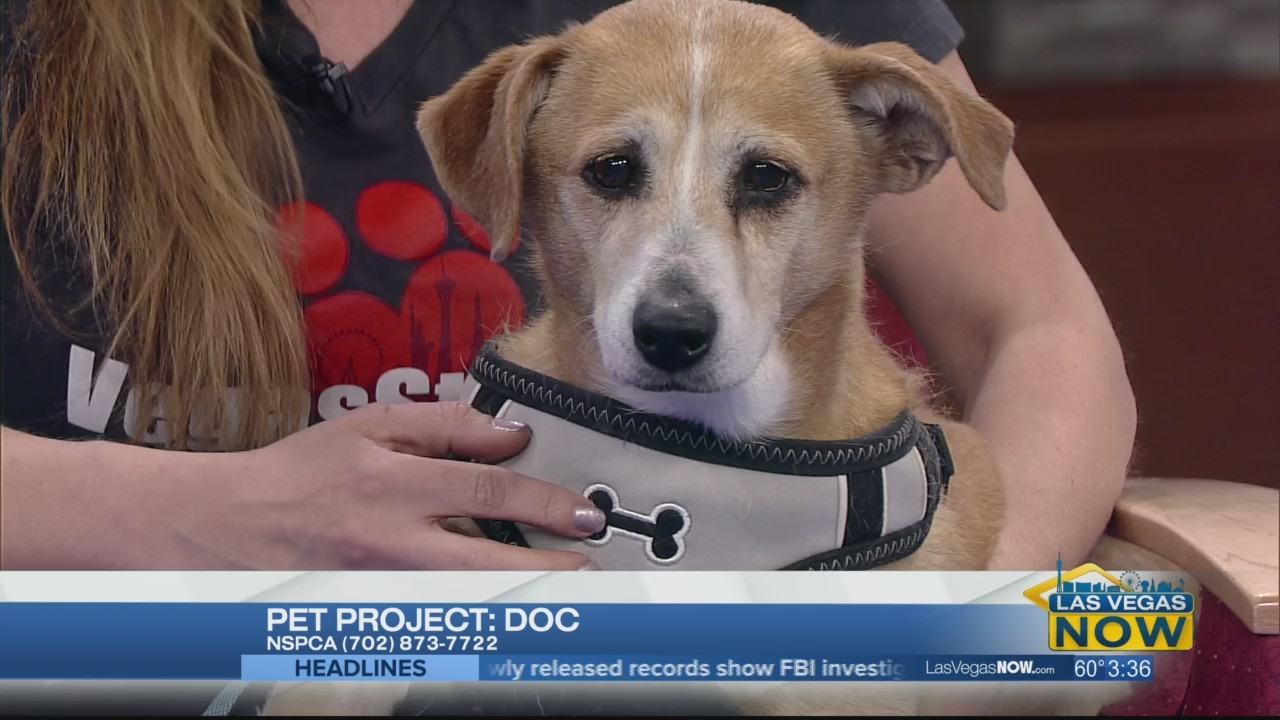 Doc the dog needs a forever home
