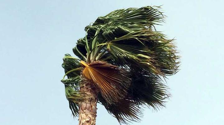 Wind_palm_tree_700_1552489093279.jpg