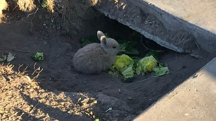 bunnies_1553177250555.JPG