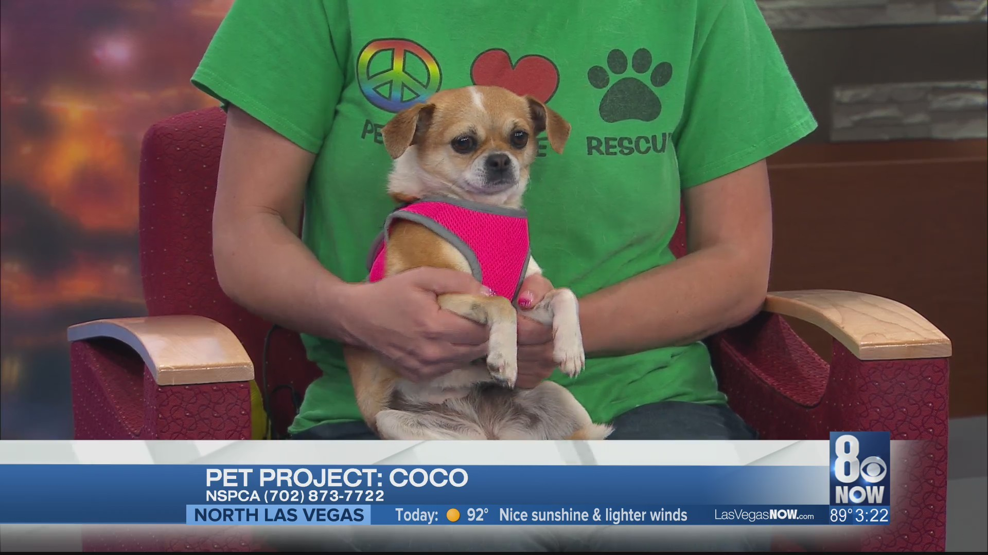 Coco the dog is looking for a forever home