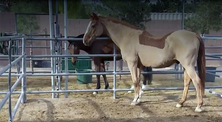 Horse_virus_700_1555011807442.jpg