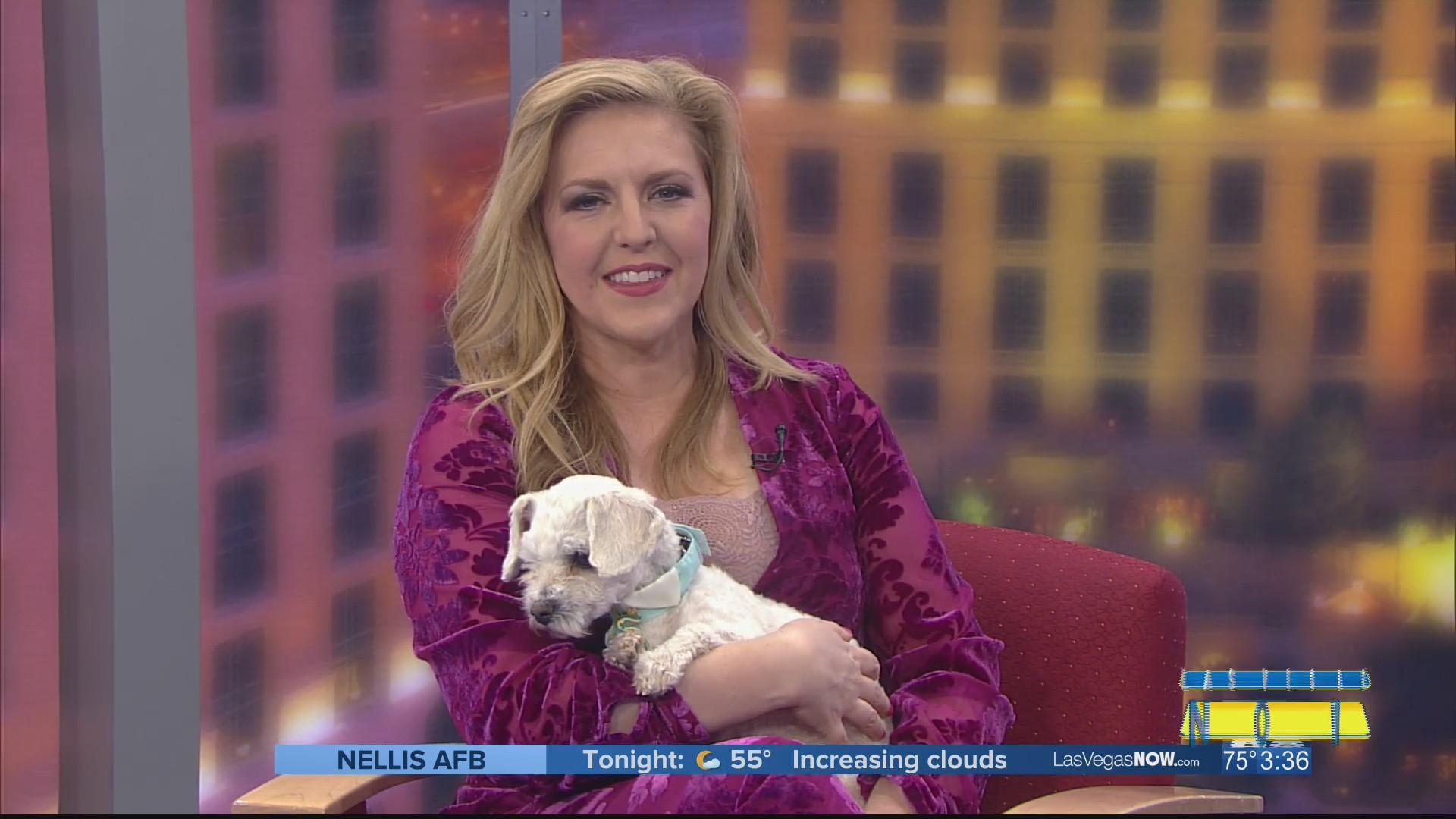 Rex the dog is looking for a forever home
