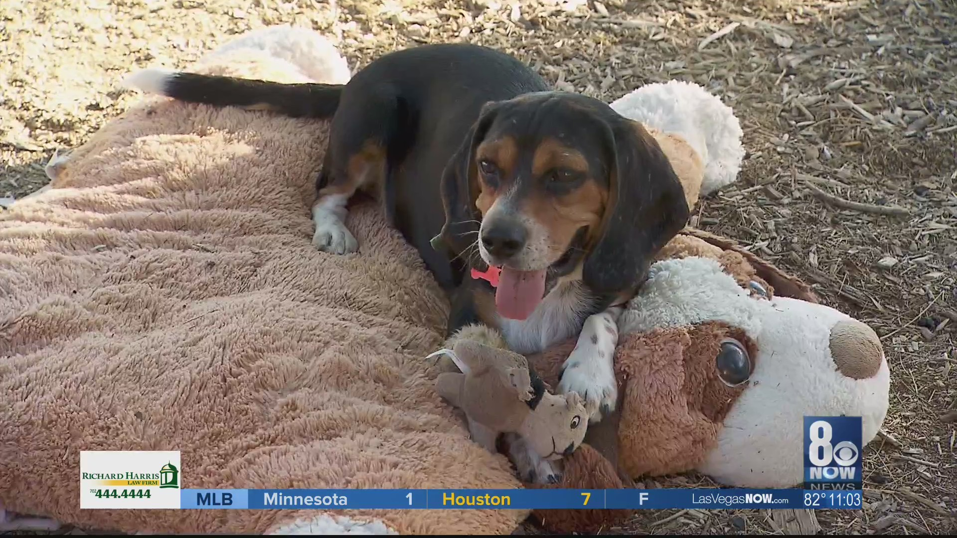 Valley Dog Rescue Needs The Community S
