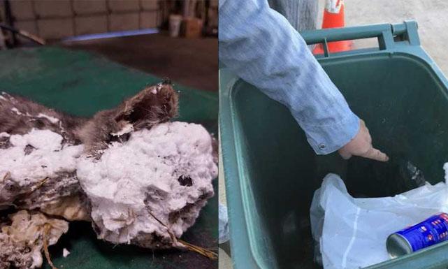 A kitten was found with spray foam in a trash can_1557952051132.jpg-842137445.jpg