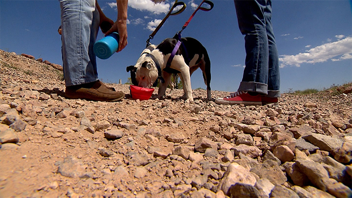 Dogs getting dumped in remote areas of the Las Vegas valley