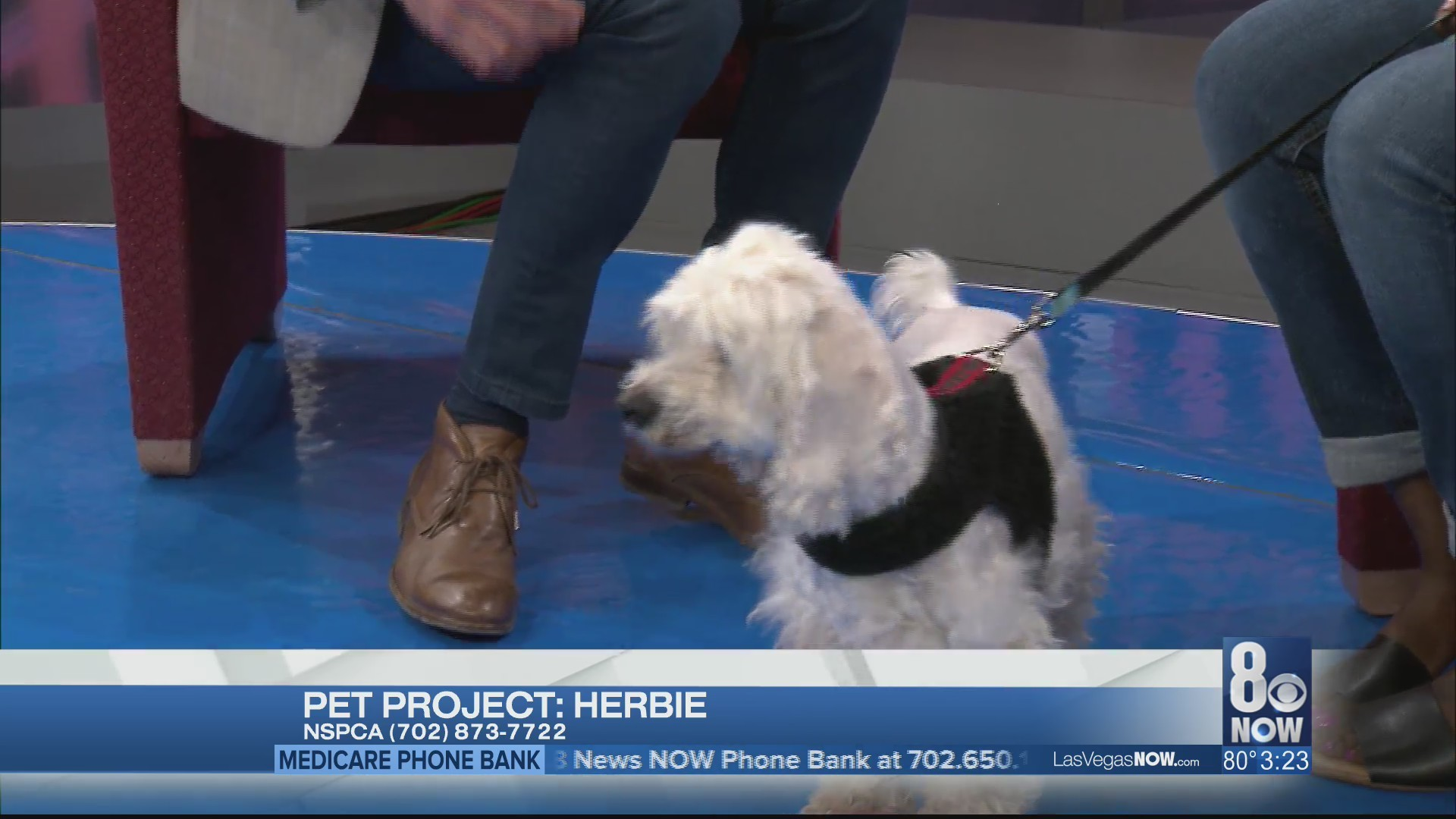 Herbie the dog needs a forever home
