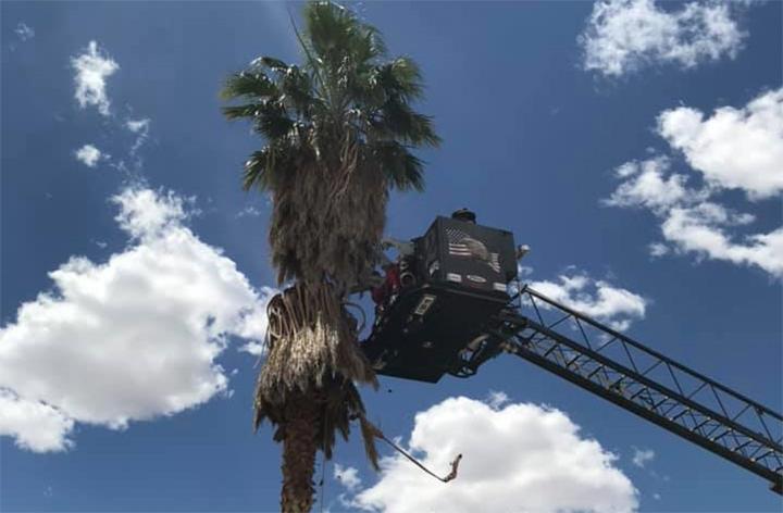 Palm_tree_rescue_700_1557351276541.jpg