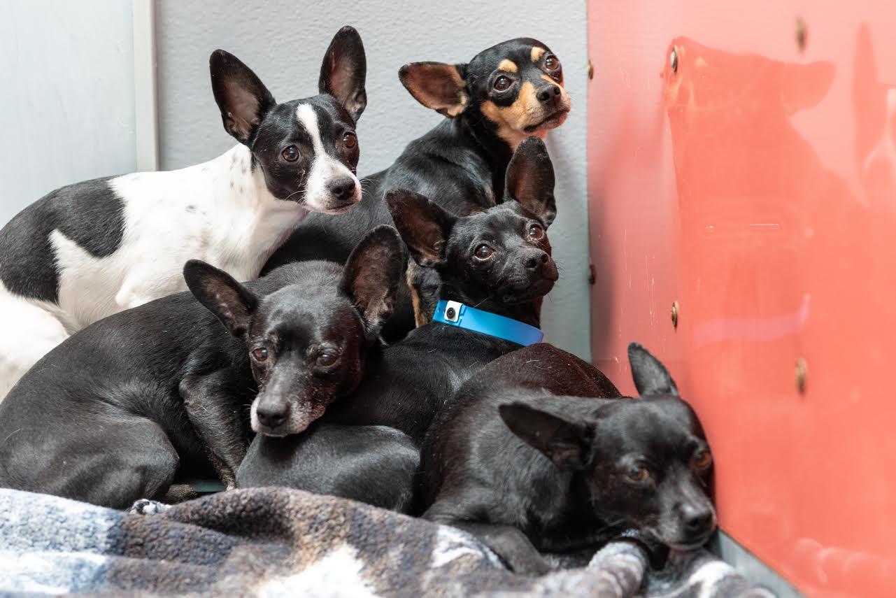 dogs_rescued_from_Savage_and_Kepler's_home_1557814743592.jpg