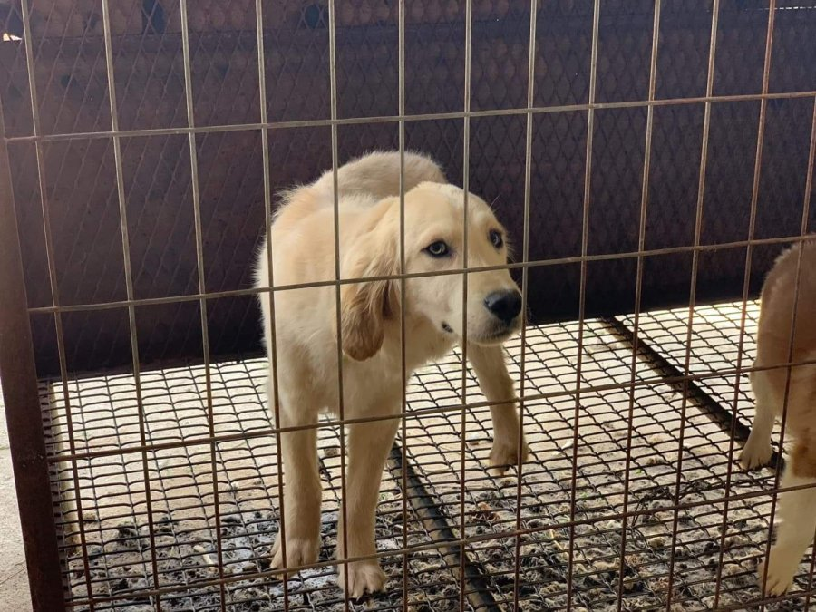 Dogs rescued from Korea