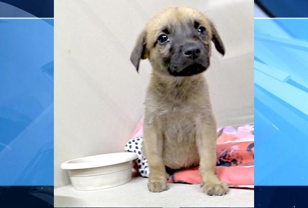 Maddie's Pet Project Adoption