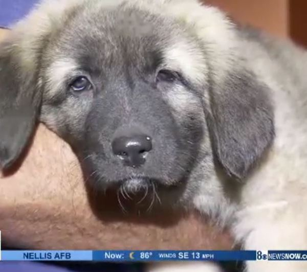 Puppies stolen from Southern Highlands