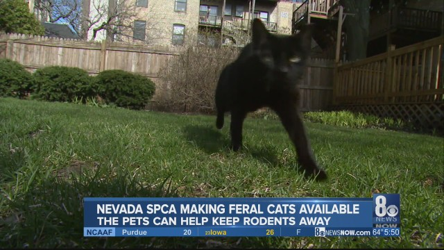 Do you have a rodent problem? A unique Nevada SPCA program can help