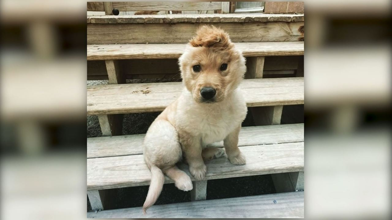 Puppy with one ear becomes an Instagram star | KLAS - 8 News NowOpen NavigationClose NavigationSearc