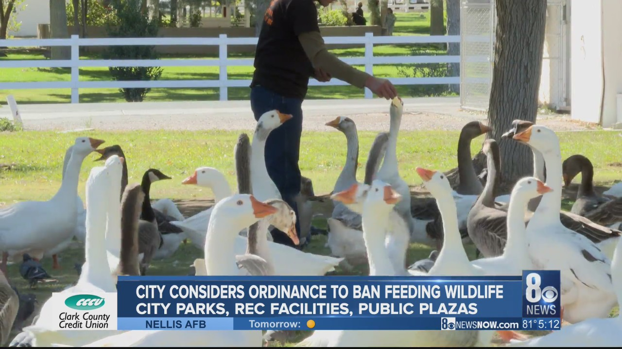 Las Vegas City Council considers ordinance to ban feeding of wildlife within parks