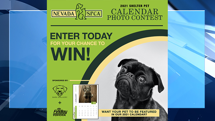 Nevada SPCA asking for submissions for 2021 shelter pet calendar