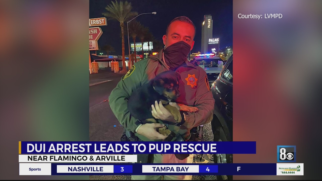 Driver arrested for DUI after falling asleep at the wheel with puppy in vehicle